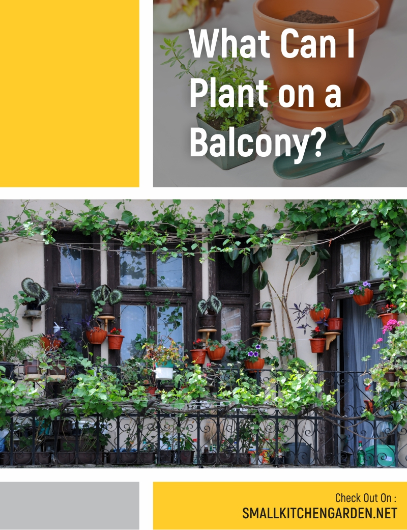 Balcony Garden Ideas (Vertical, Vegetable, Flower, Decoration)