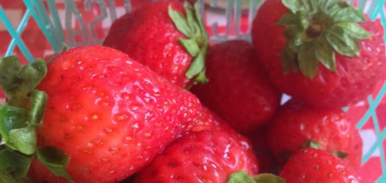Fall Strawberries