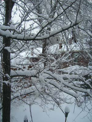 snowfeb7-4.jpg
