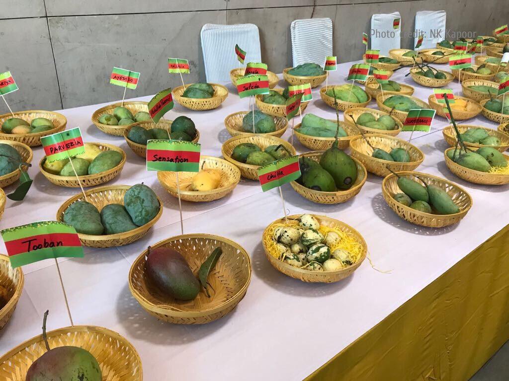 Indian Mango Varieties