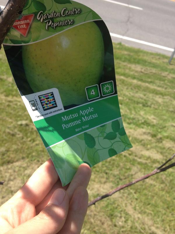 WEBB-apple2IMG_8690