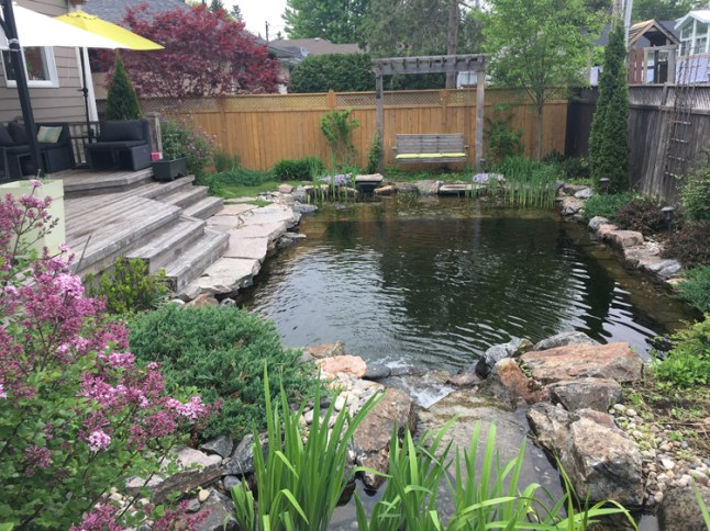 """Westboro's Nadja Becsey knew she wanted her own swim pond when she moved to the area. """"I lived in Germany for twenty years, and it's standard practice there to have what's called a natural swim pool,"""" says Nadja."""