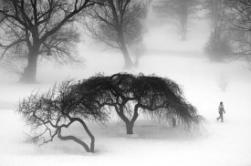 """Ottawa Arboretum"" by Dan Jones"
