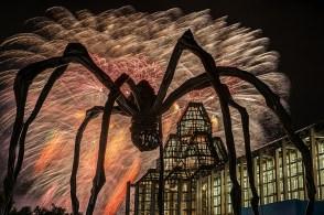 Spider invasion, by Dan Jones