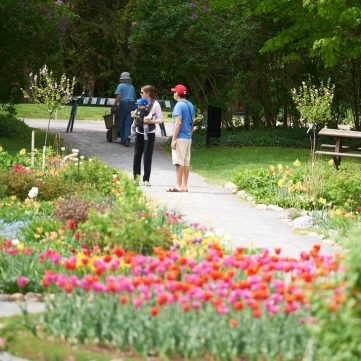 Locals appreciate the tulips in Kitchissippi on May 23 while keeping safe distance during the pandemic. Photo by Ellen Bond.