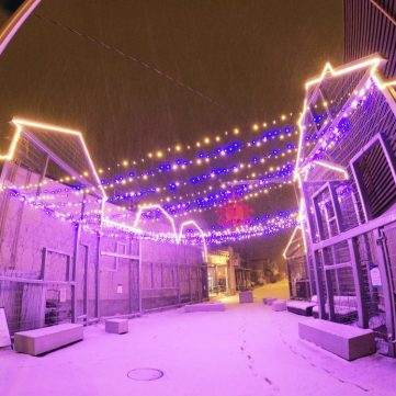 Lights are strung across two buildings in Westboro while the snow falls.