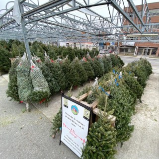 Christmas trees are lined up at Parkdale Market.