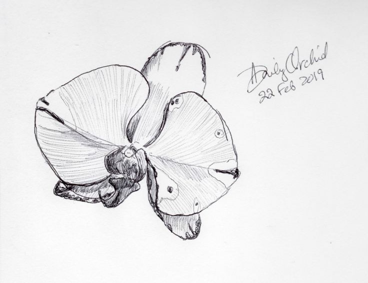 Sketch of an orchid flower done with ballpoint pen by Kit Dunsmore.
