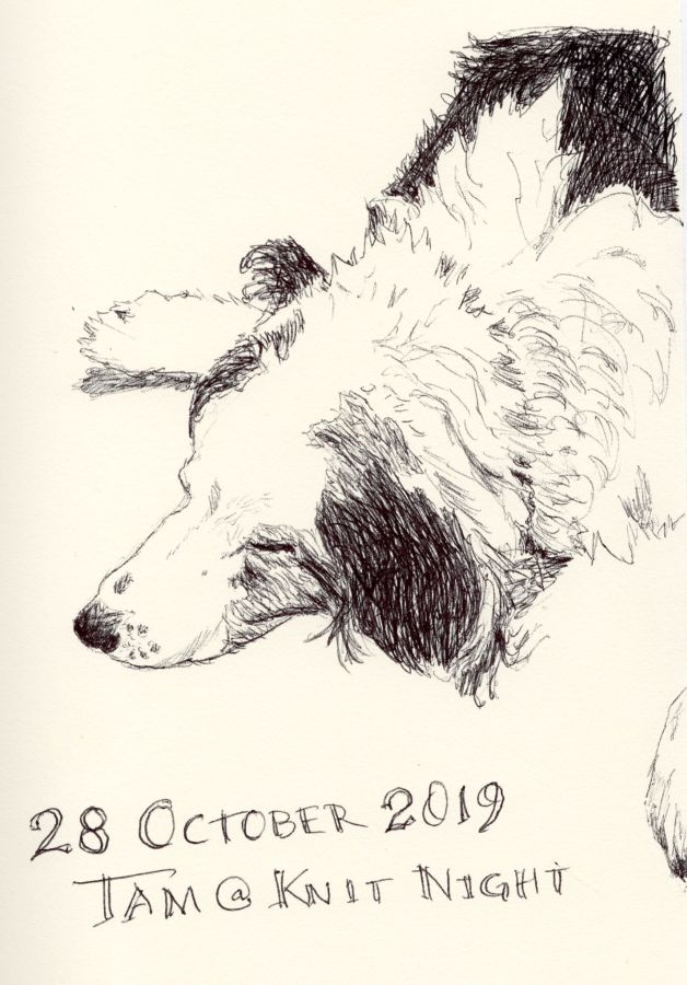 Black and white ink drawing of a border collie by Kit Dunsmore