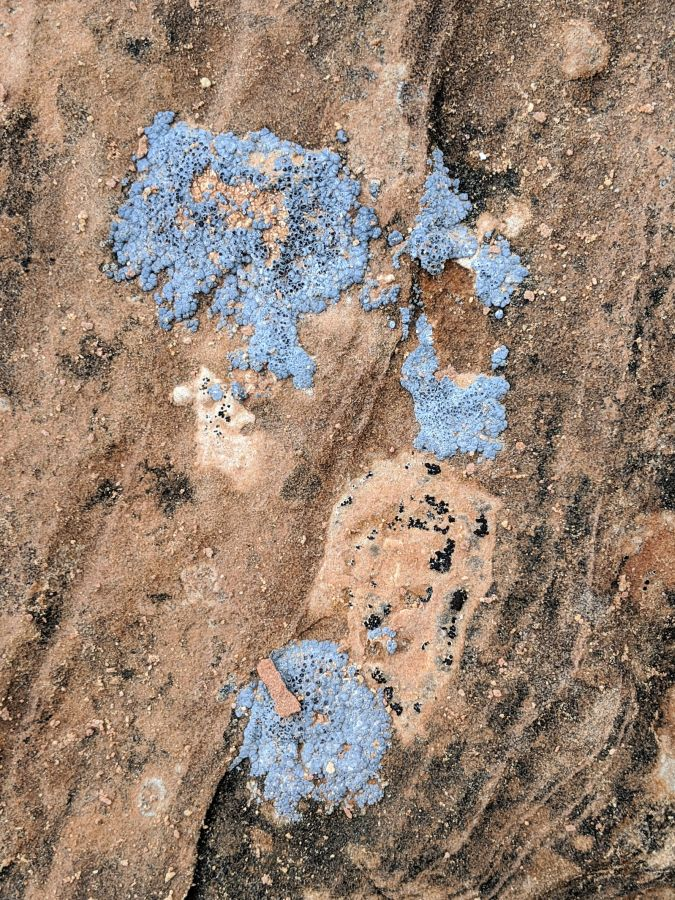 Close up shot of silver blue lichen on a peach and black rock. Photo by Kit Dunsmore