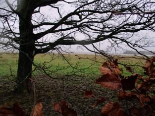 Loch obscured by tree