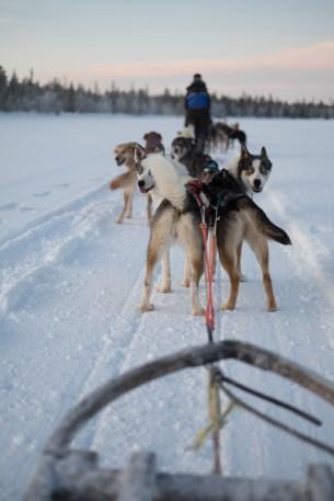 In viaggio con gli Husky