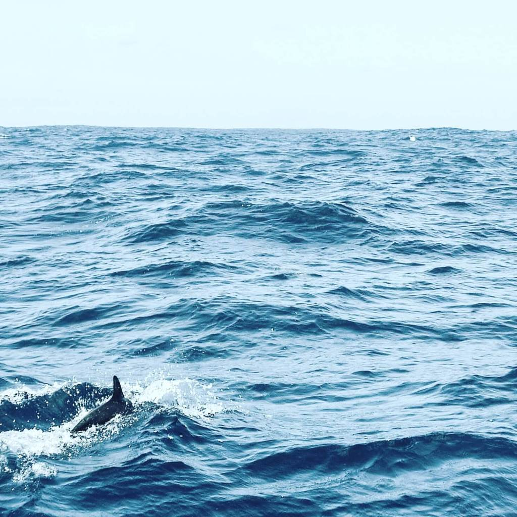 Video Blog: Sailing with Cetaceans