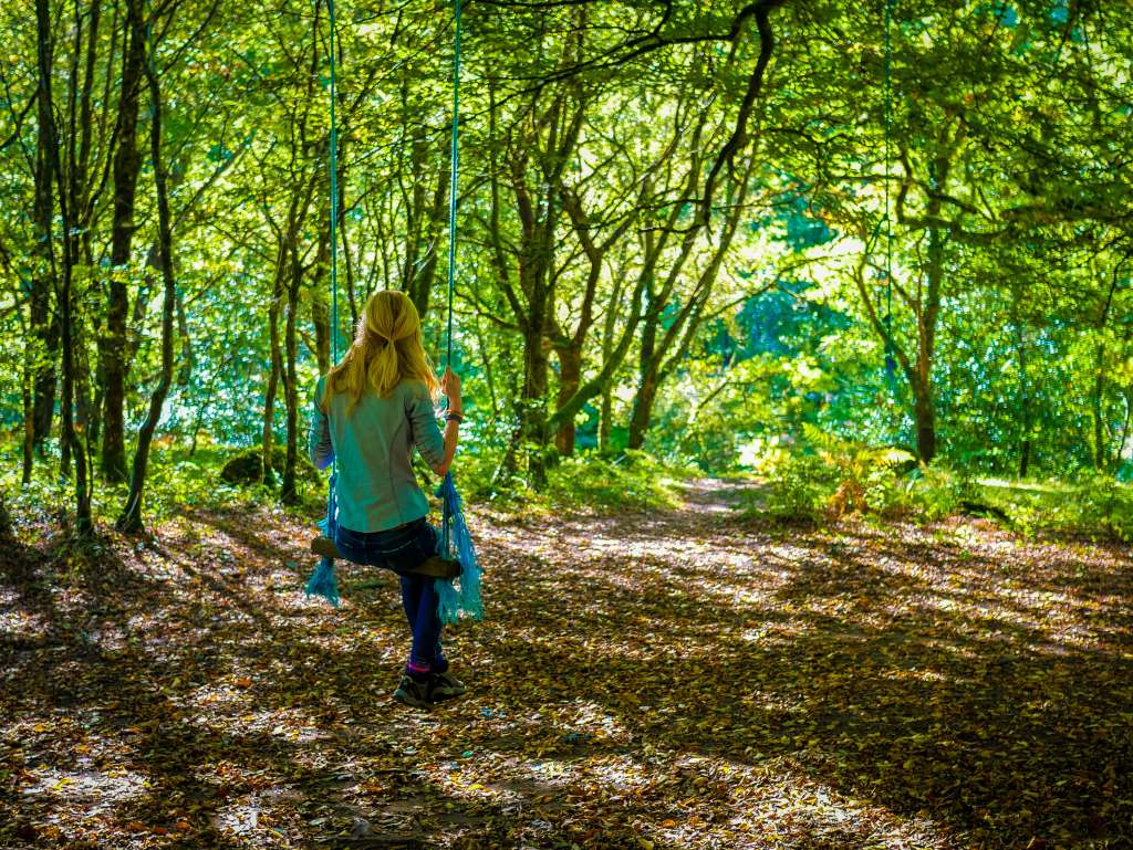 Dartmoor Walking – A view through the ancient forest