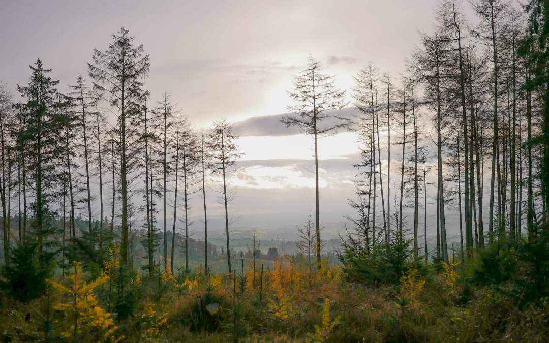 Haldon Forest Park: Why it Deserves More Attention