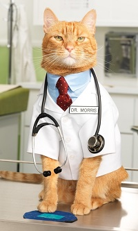 Травмы у кошек. Как определить ушиб лапы у кота? Сильные ушибы кота что делать