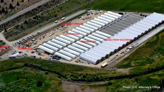 A view of the marijuana farm on the XL Rancheria in California.