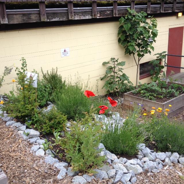 Kitscc_CC_Colaborative_Gardens_2046