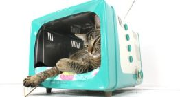 Things We Love – TV Cat Beds