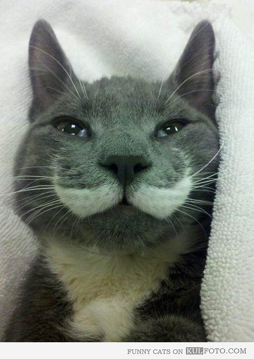 Majestic-Mustache-Cat