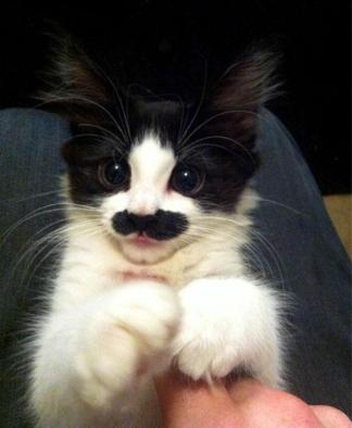 animals-with-mustache-9
