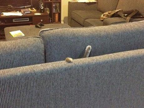 funny-cats-dogs-stuck-furniture-8