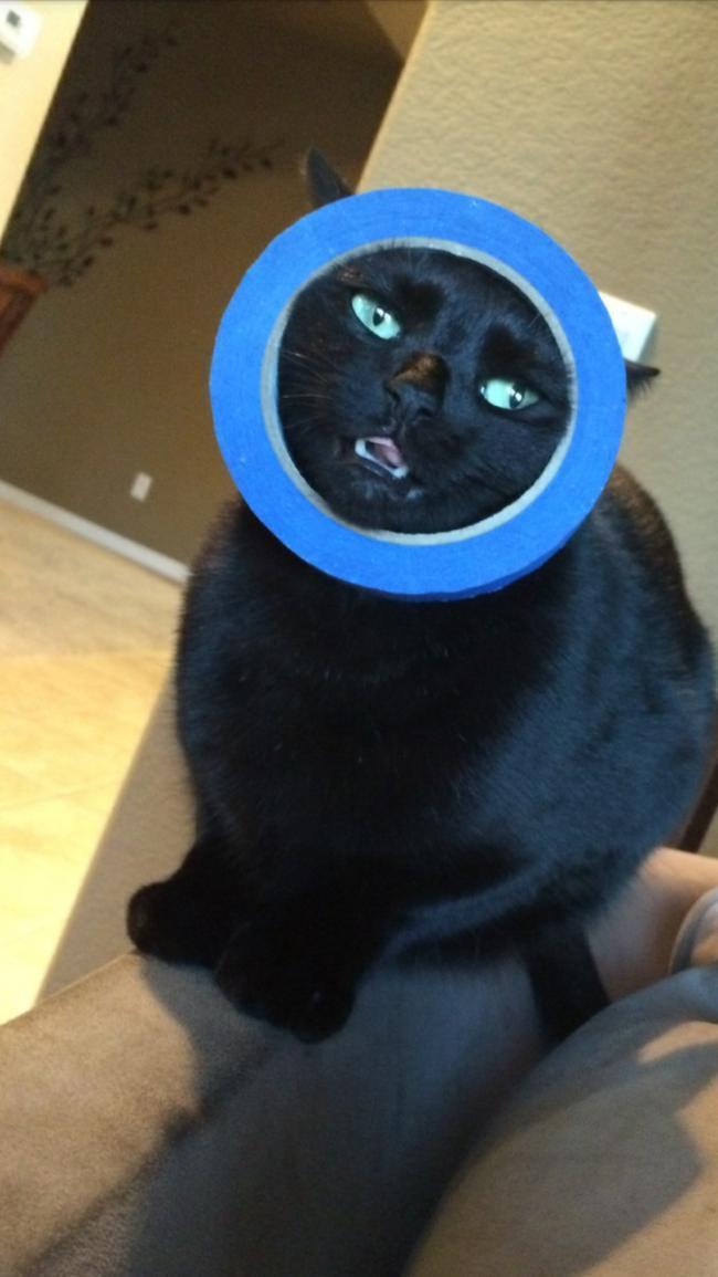 cat-mistakes-09
