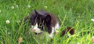 Cat hiding in the grass