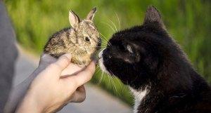 Cat meets rabbit