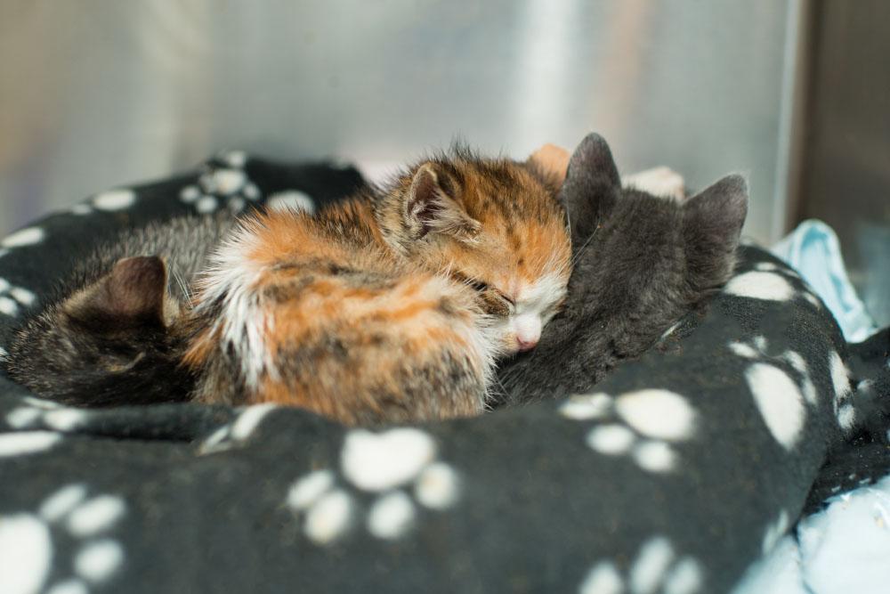 raising orphaned kittens kitten