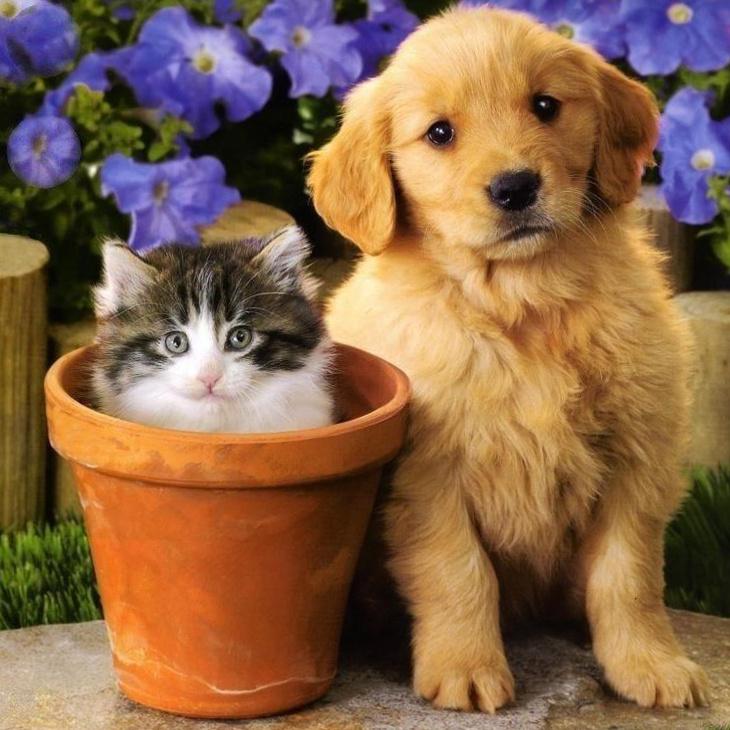 kittens n puppies portfolio