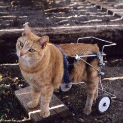 Wheelchair For Cats Hanging Chair Office Two Companies Show Us That Can Thrive In Wheelchairs