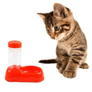 Pet Automatic Water Feeder Dispenser Food Dish Bowl For Pet Dog Cat Drinking Water Food Bow