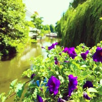 Pansies & Waterways