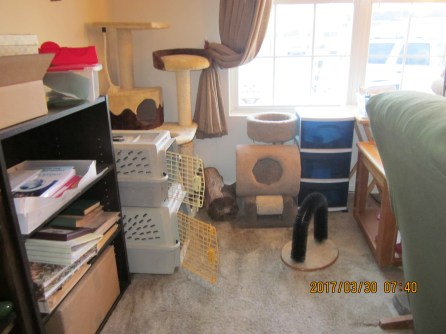Here is a closer view of the kitty corner.