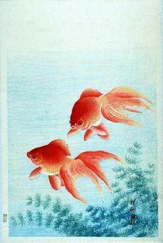 fish, japanese goldfish g cleveland
