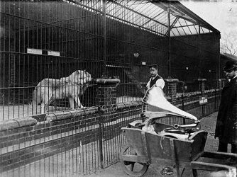 ca. 1935, Regent's Park, London, England, UK --- Gramophone music is played to a pair of wolves in captivity at London Zoo. England, ca. 1935. --- Image by © Hulton-Deutsch Collection/CORBIS
