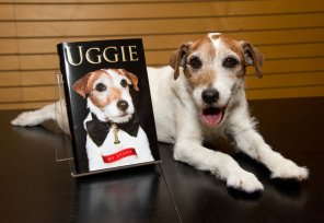 """SANTA MONICA, CA - OCTOBER 19: Uggie the dog poses with a copy of his book """"Uggie : My Story"""" at Barnes & Noble 3rd Street Promenade on October 19, 2012 in Santa Monica, California. (Photo by Amanda Edwards/WireImage)"""