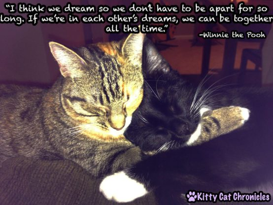 Delilah & Sampson - Winnie the Pooh Quote