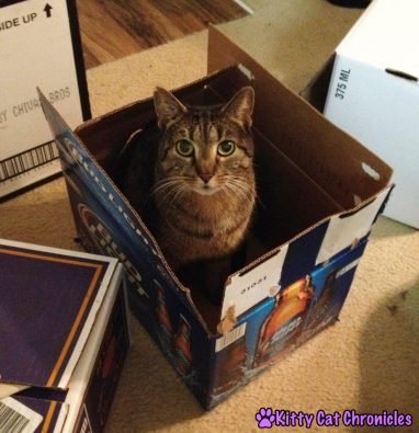 Sassy Cat in a Box