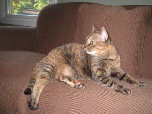 Photo: Aurora - FIV+ Cat