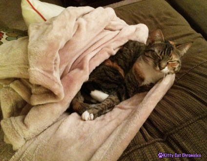 7 More Reasons to Adopt a Shelter Cat - Zen Masters