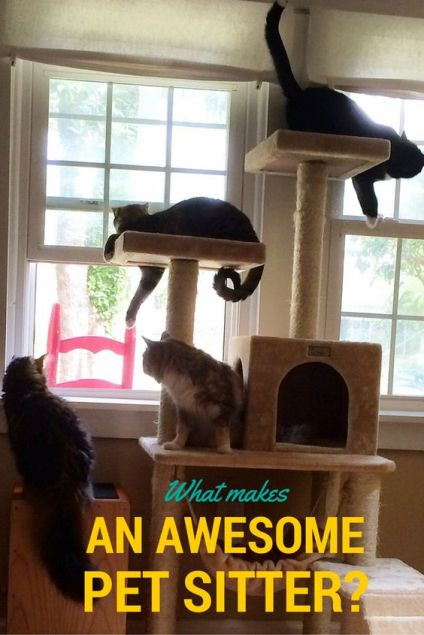 What Makes an Awesome Pet Sitter?