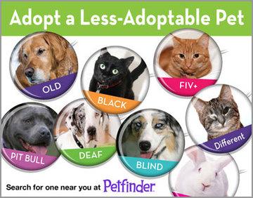 Adopt a Less-Adoptable Pet Week 2015