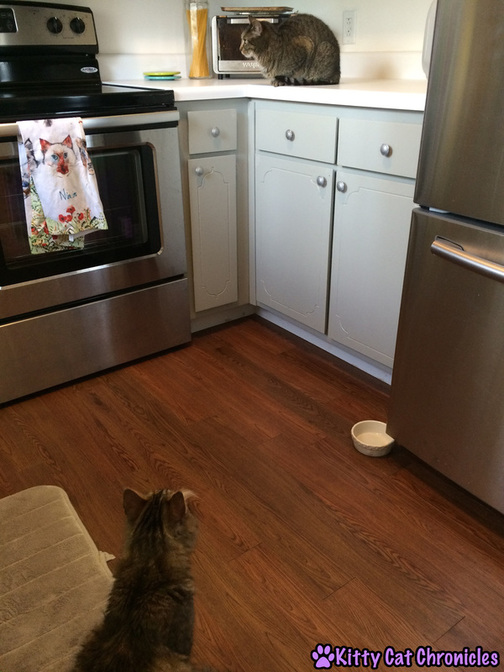 cats in kitchen, Caster's Big Meeting