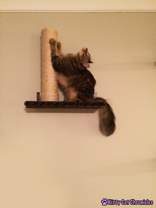 Wordless Wednesday: There's Nothing Like a Good Cat Scratcher