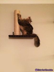 cat with good cat scratcher