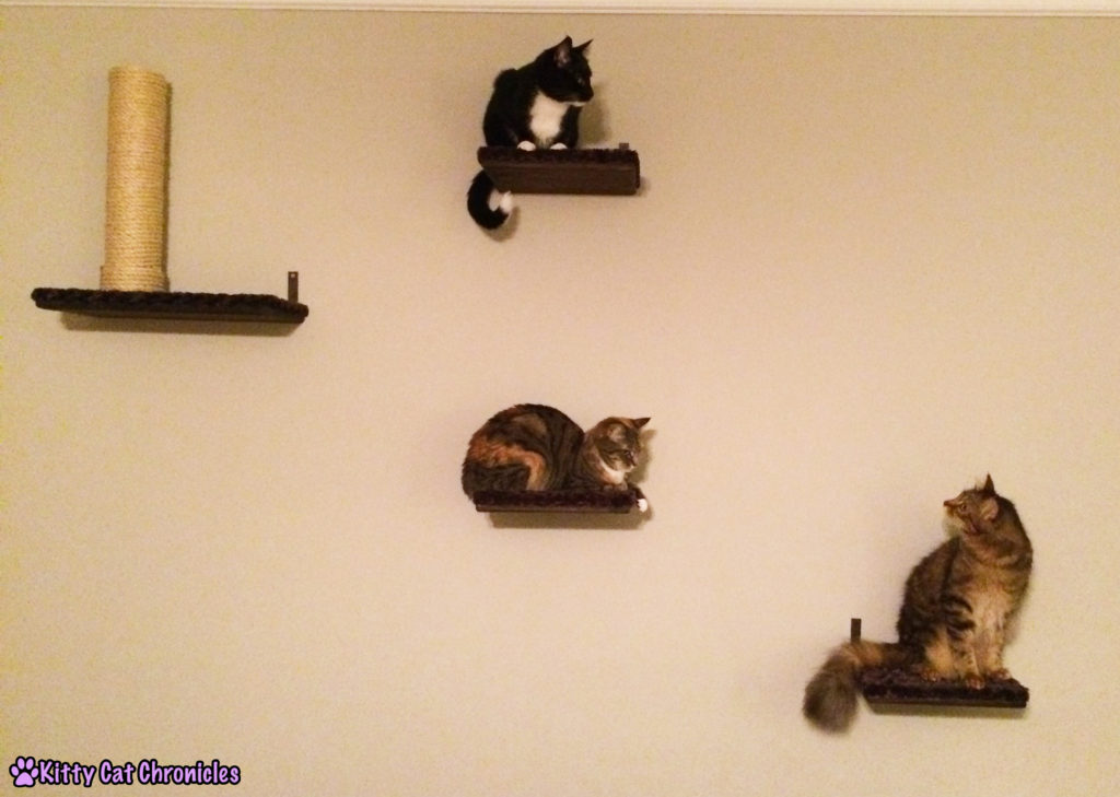 Cats on Shelves - Operation Catification