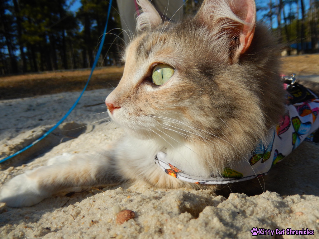 Sophie at Lake Tobosofkee - #WobblyWednesday