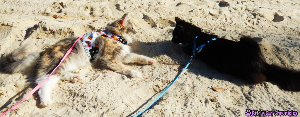 Sophie & Kylo Ren at Lake Tobosofkee - Cats on Beach / Take Your Cat on an Adventure Day